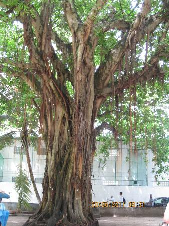 National Museum : A wish-tree in the Sultan Park