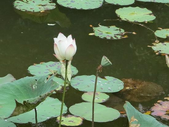 Koh Samui Resort: jolie matinee
