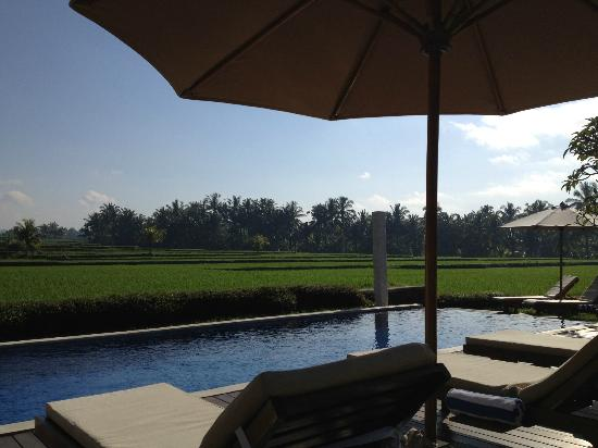 The Samara: in the middle of rice field, far from touristic Ubud