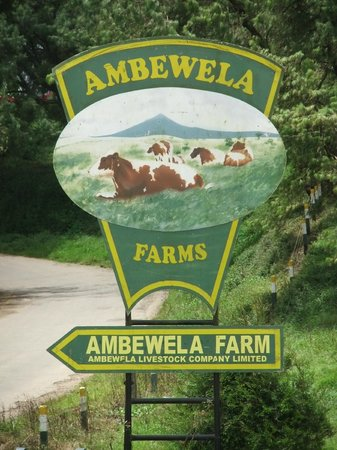 Ambewela Farms