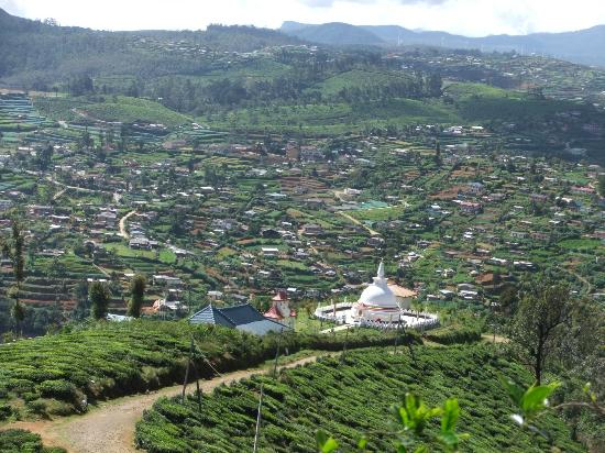 Image result for single tree nuwara eliya