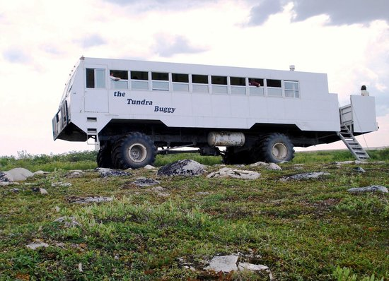 The Tundra Buggy Adventure - Day Tours: Summer Tundra Buggy tours allows guests to get off the buggy and explore the tundra