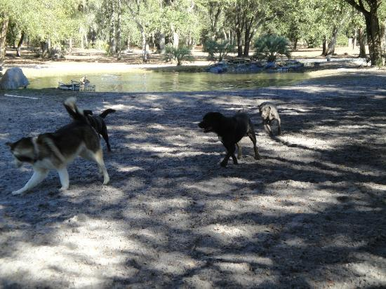 Bark Central Dog Park: Kera playing with new friends