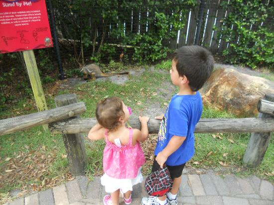 Tampa's Lowry Park Zoo: Up close and personal