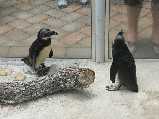 ZooTampa at Lowry Park: South Pole visitors