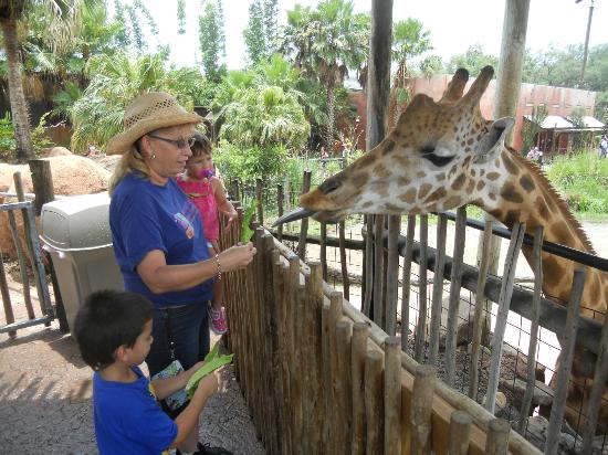 Tampa's Lowry Park Zoo: You have got to try this!!