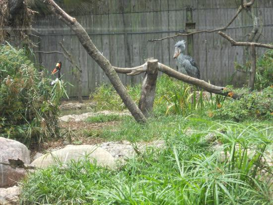 ZooTampa at Lowry Park: Really unusual birds.