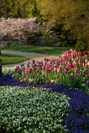 Cheekwood Botanical Gardens & Museum of Art: Cheekwood in Bloom - over 55,000 tulips in 2013