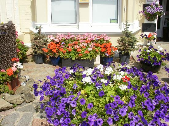 Benson's Guest House: More Blooms