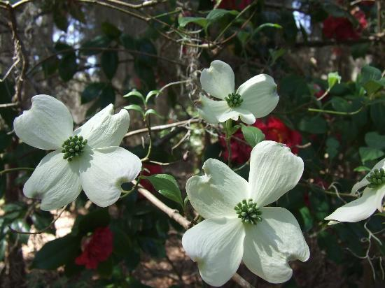 Spring is especially gorgeous at Dunham Farms when native dogwoods are in bloom