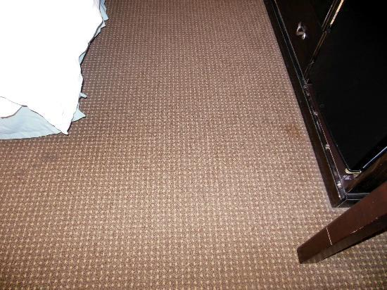 Best Western Albany Airport Inn: carpet stained