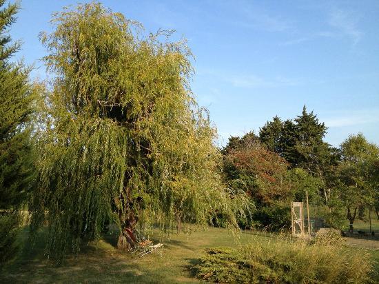 Couleur Lavande: Relaxing landscape