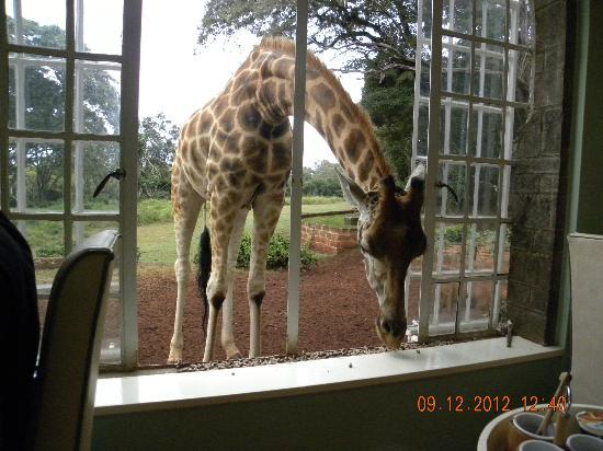 Giraffe Manor: Breakfast with the Giraffe