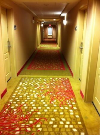 Hampton Inn & Suites Hartford/East Hartford : hallway