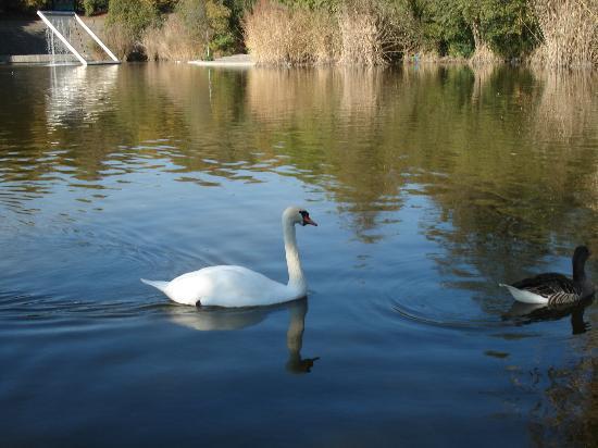 Wirtshaus am Rosengarten: wenige Schritte vom Restaurant - Westpark-See-Idylle