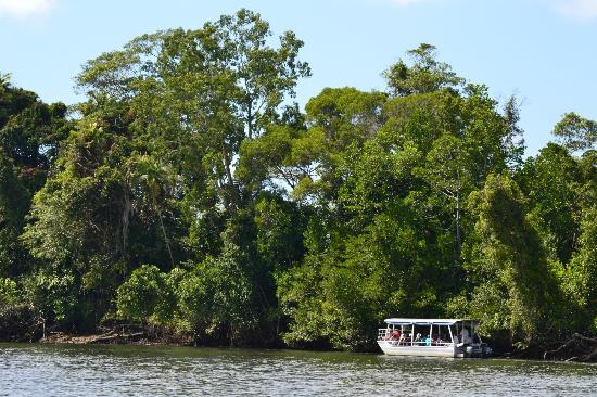 Bruce Belcher's Daintree River Cruises: Another tour exploring on the other side