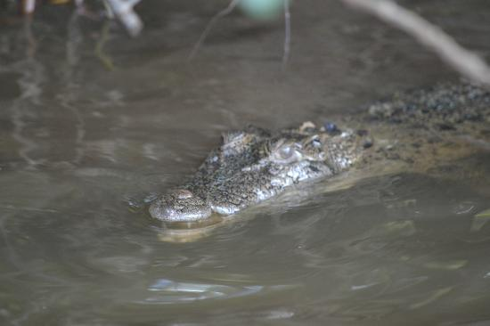 Bruce Belcher's Daintree River Cruises: looking for some breakfast!