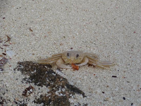 Paradisus Rio de Oro Resort & Spa: oops... crab