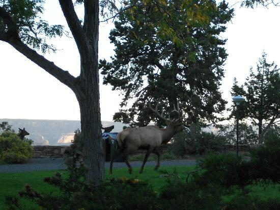 Kachina Lodge : Great view with elk outside your window