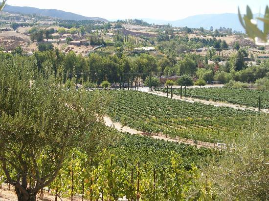 temecula cougar women Photos at cougar vineyard & winery - temecula, ca skip to search form skip to photos for cougar vineyard & winery.