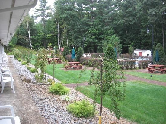 Golden Apple Inn: Back yard