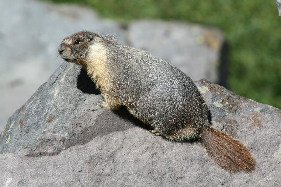 Swiss Chalet Bed and Breakfast Inn: Name this critter and win a prize.