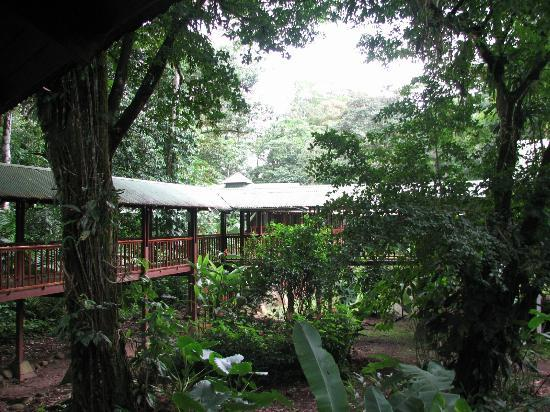 Selva Verde Lodge: Covered Walkways