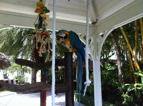 The Palms Hotel & Spa: BIRDS