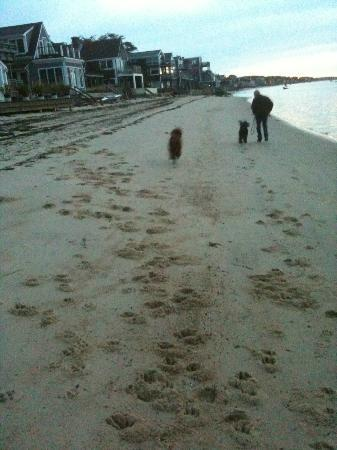 Bayshore/Chandler House: Great beach for romping morning noon and night