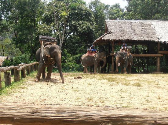 Phuket Sealand Co - Day Tours: Elephant camp