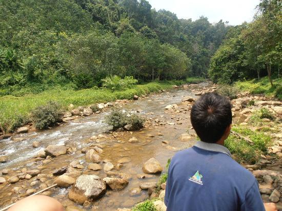 Phuket Sealand Co - Day Tours: Elephant trek at the river