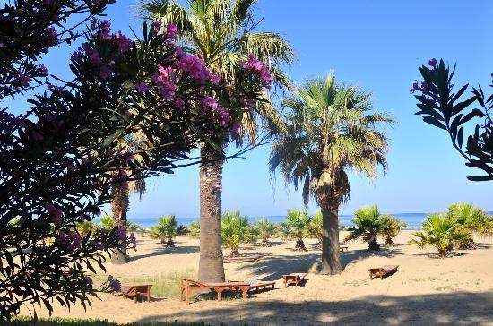 Dereli Motel: Blick in die Palmen