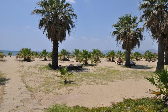 Dereli Motel: Blick auf den palmenbesetzten Strand
