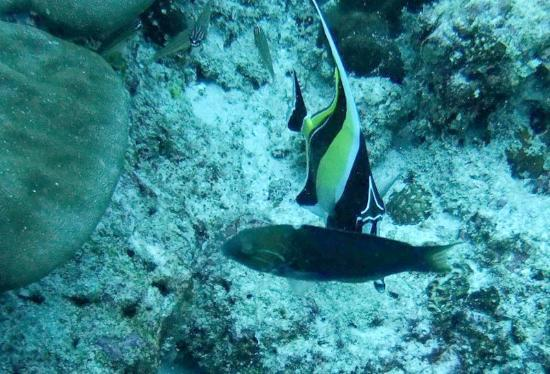 Paradise Sun: Diving in Praslin