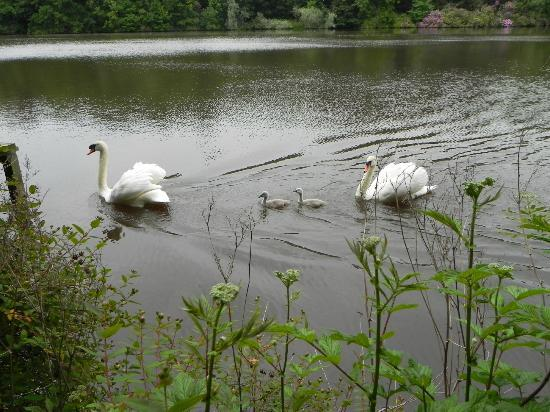 Doxford Farm Cottages: Swans on Lake