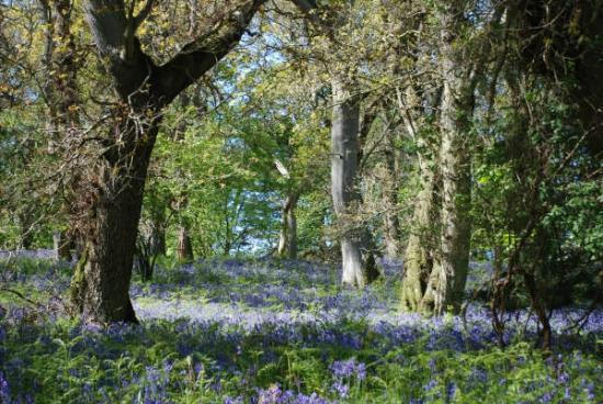 Doxford Farm Cottages: Blue Bell Wood
