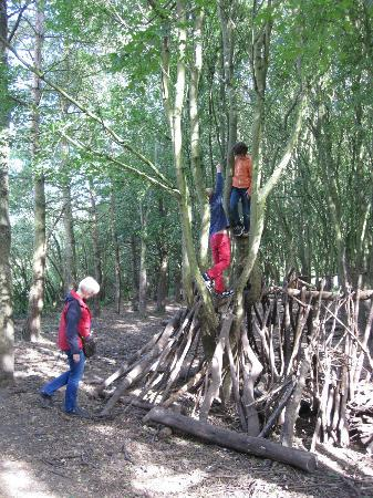 Ryton Pools Country Park: Den Building.