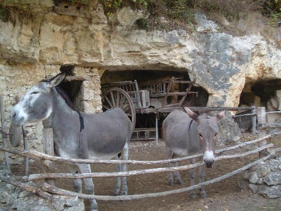 La Vallée Troglodytique des Goupillières : Les animaux de la ferme sont là pour faire revivre le site