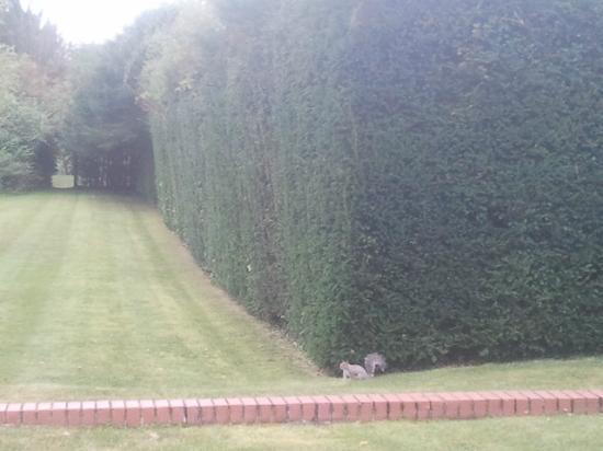 Manor Of Groves Hotel: scoiattolo in giardino