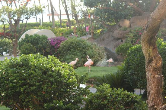 Hyatt Regency Maui Resort and Spa: Pink Flamingos on the resort grounds