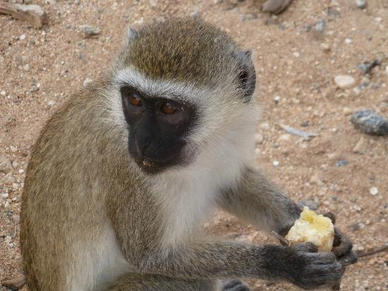 Garoda Resort: safari