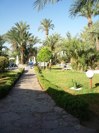 Royal Decameron Issil: jardin vers la piscine