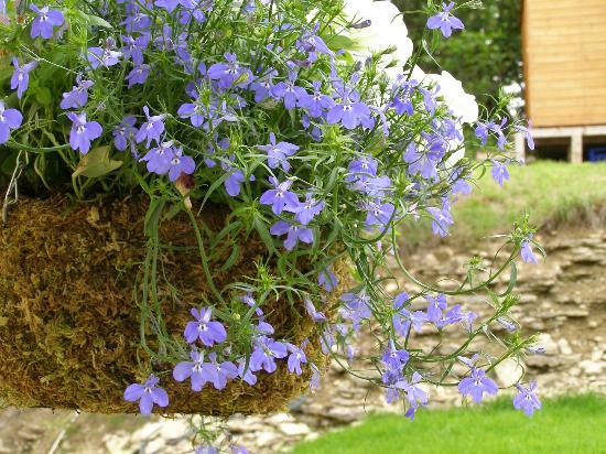 Hope's Edge Bed and Breakfast: Hanging Basket