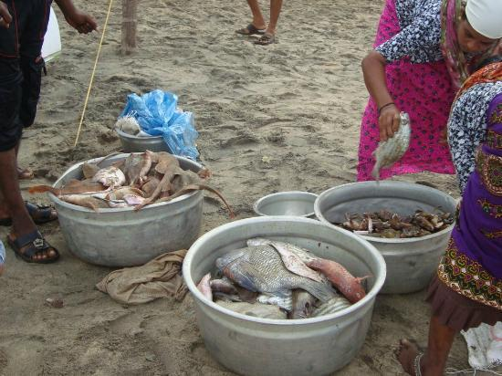 Sanctum Spring Beach Resort: The morning catch at the beach