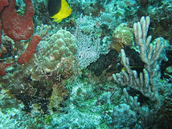 Scuba Libre: Nice Coral and fish.