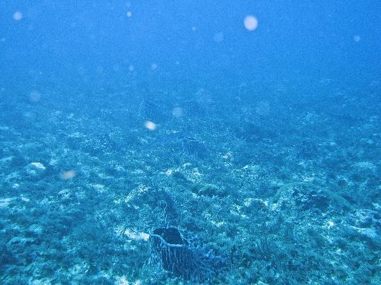 Scuba Libre: There is a Barracuda in the center of this picture.