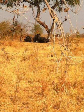 Rhino Walk - Mosi oa Tunya Park