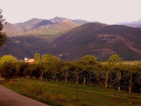 Hotel Villa Il Crocicchio: The Spectacular View