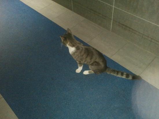 Villafranca di Verona, Italy: un gatto nel corridoio su un parquet vomitevole