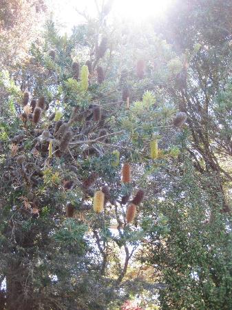 UCSC Arboretum: Australian Back Country